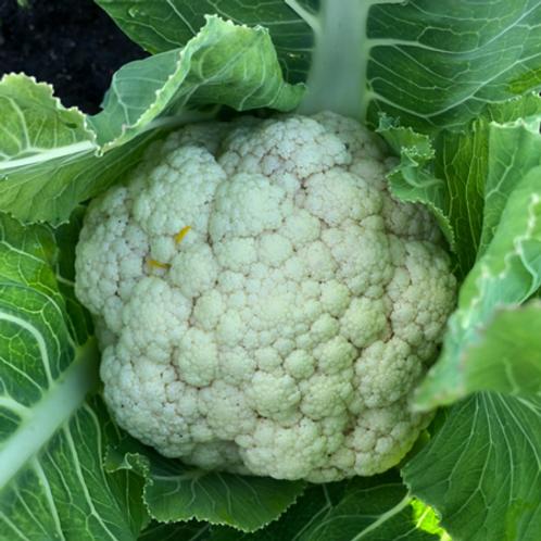 Cauliflower (small)