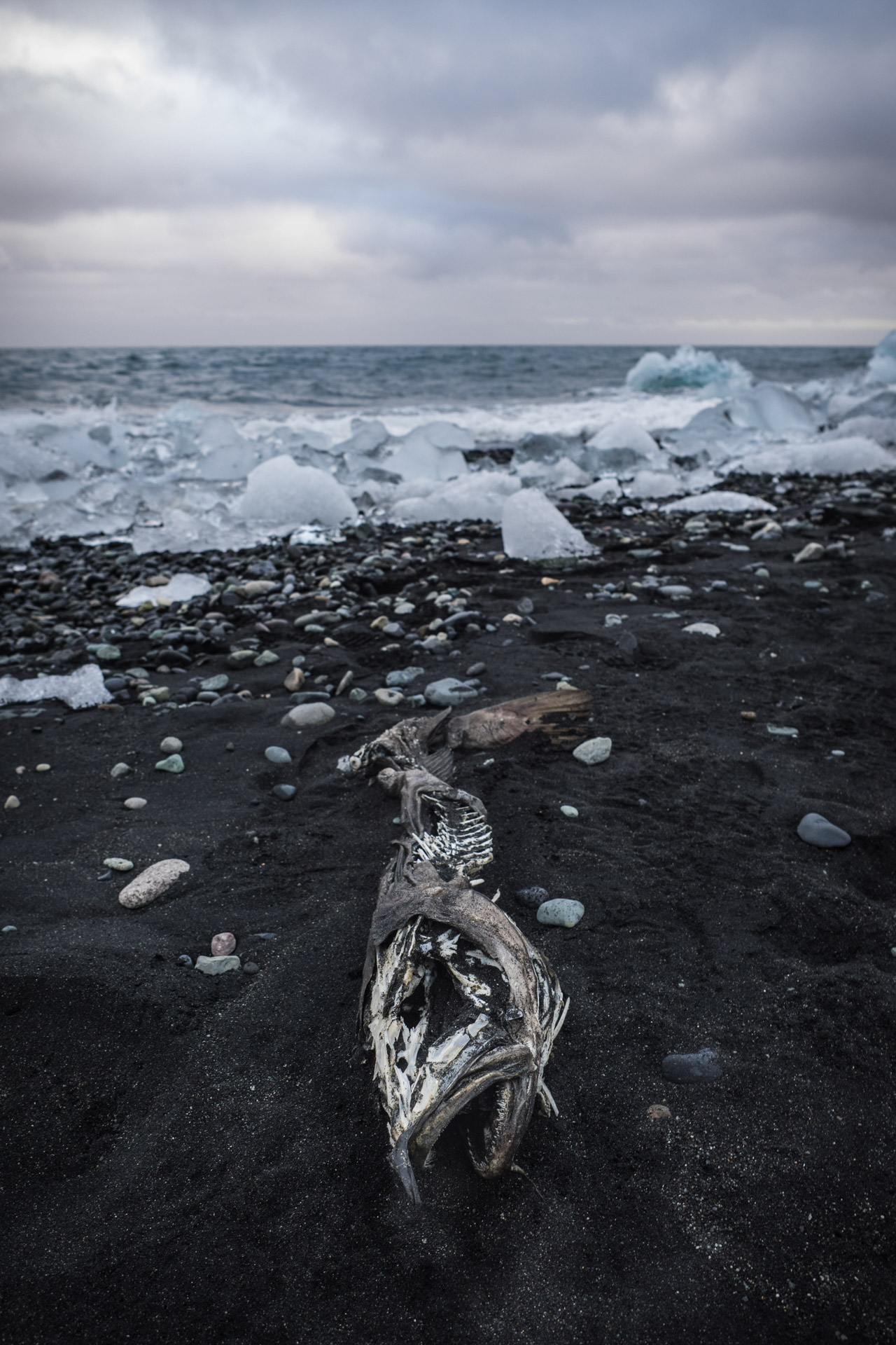 Fisch, Jökulsarlon, Island