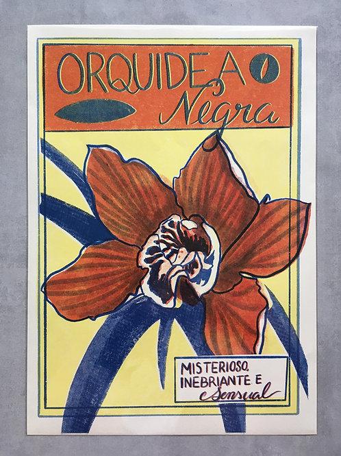 Sinestesias (orquídea negra)_ Ana Novi
