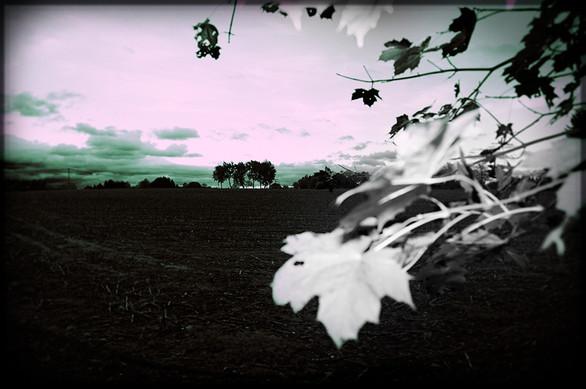 Landschaft02.jpg