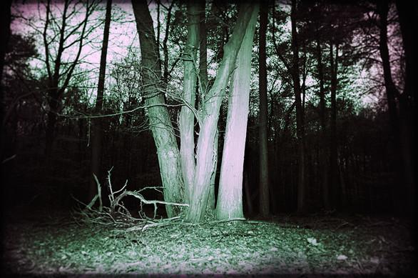 Landschaft06.jpg