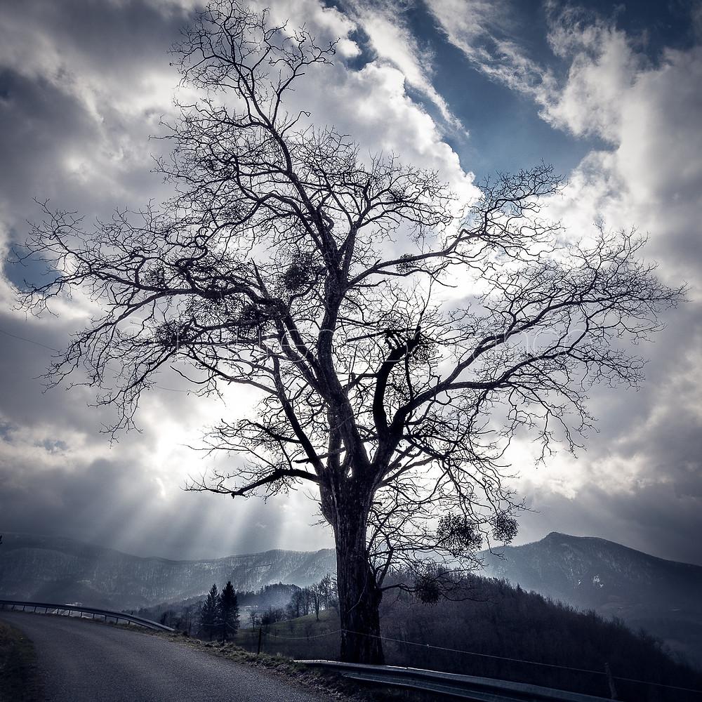 Un arbre solitaire dans le Couserans, Ariège, France.