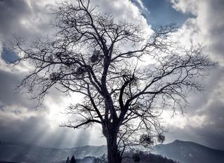 Il y a un arbre...
