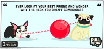 pmp_timeline_comedians.png