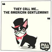 American_Gentleman.png