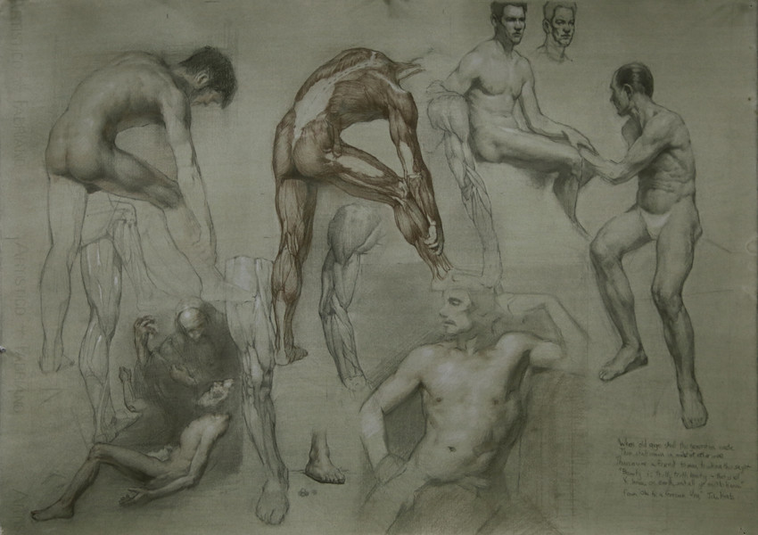 anatomystudies.JPEG