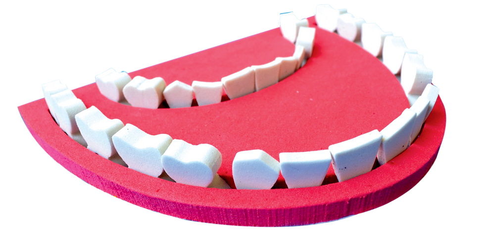 Teeth & Types of Teeth - Webinar