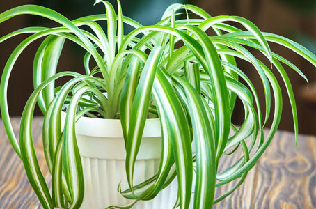 Top 3 easy to grow house plants !