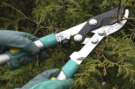5 things to remember when it comes to pruning
