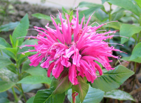 Three picture perfect September flower combinations