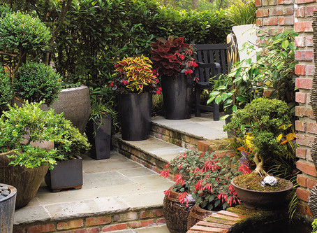 Giving your plant containers some TLC