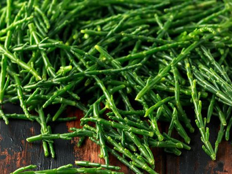mmmh Marsh Samphire and how to grow it!