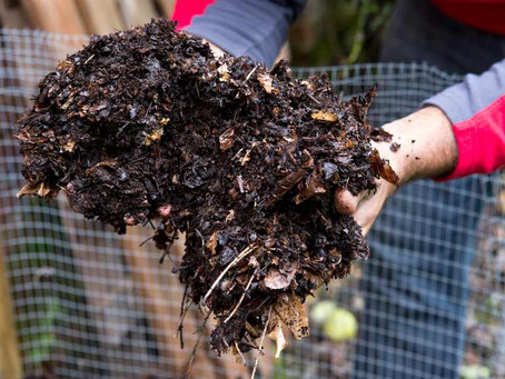 What you didn't realise about leaf mould Bin!