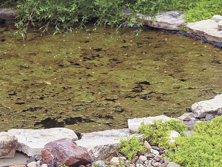 6 clever ways to improve your pond