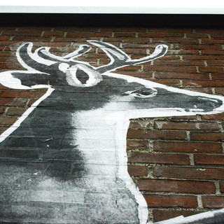 stag face from below.jpg