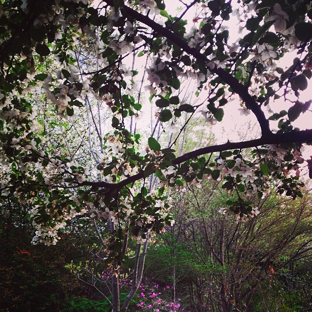 Instagram - The garden at Robbins Library