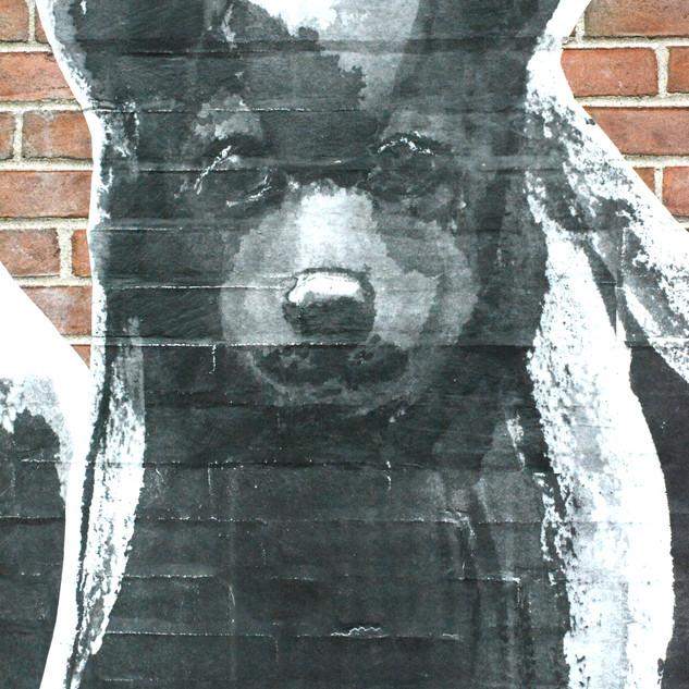 bear cub face mid closeup.jpg