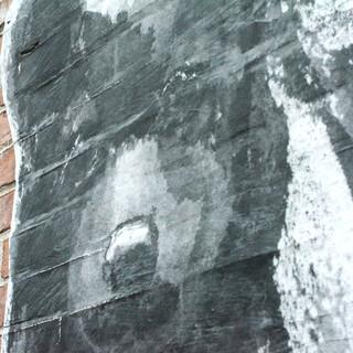 horizontal bear cub face texture.jpg