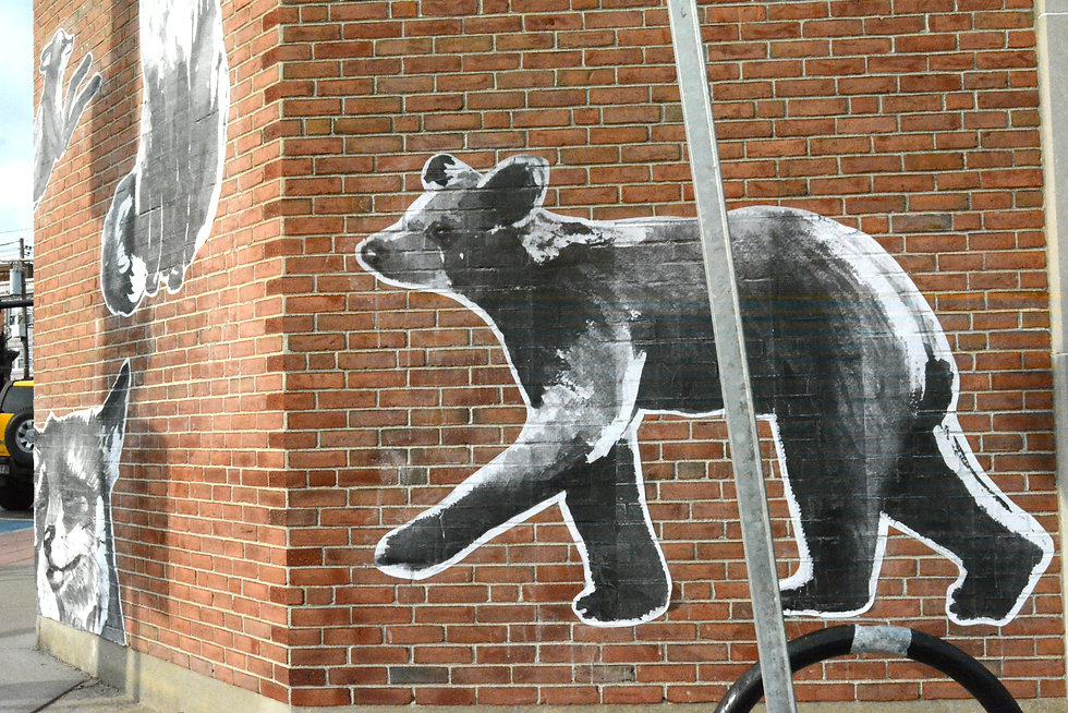 bear walking pole.jpg