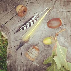 Instagram - Today's haul from Menotomy Rocks