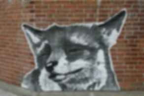fox face closeup.jpg