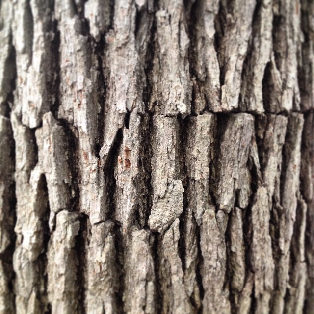 Instagram - Why do we earn to color tree trunks brown.jpg They are quite gray he