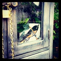 Instagram - Look who's back!  If only I spoke bird.jpg