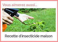 insecticide maison.jpg