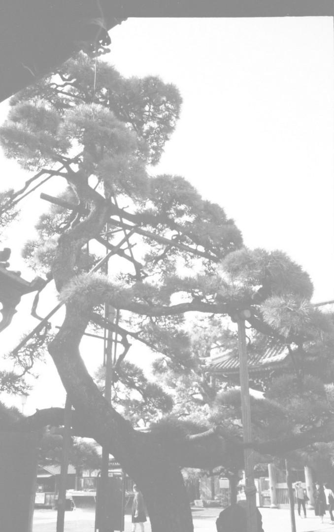 10-Scan 45.jpg