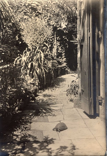 Jardin et tortue de Pierre Loti