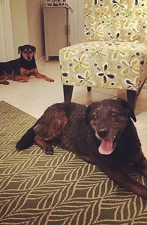 Two happy bath customers, Chili Bean and Bella! 🛁🐶