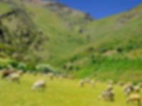 lanjaron-alpujarra_edited.jpg