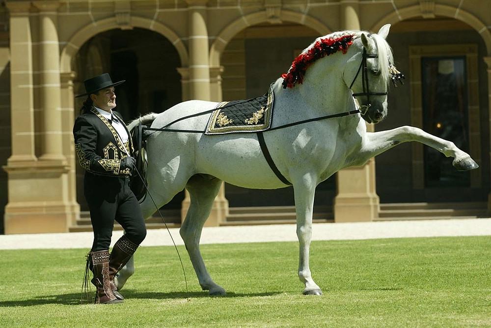 Лошадь, всадник, Андалусия