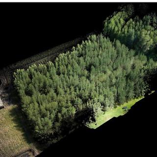Plantation Forestry LIDAR Survey - Colorised
