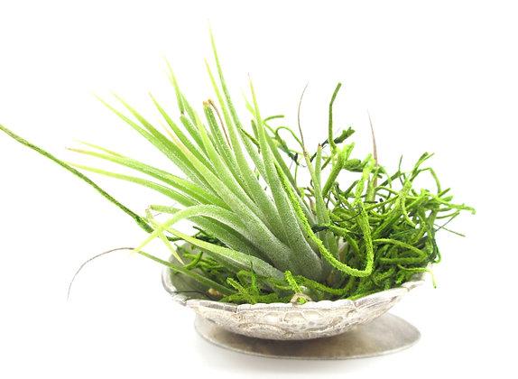 Plant bowl.