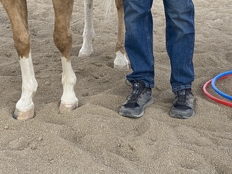 Helping men heal through Equine Assisted Coaching
