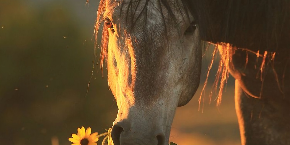 A Journey Of Healing The Heart With Horses
