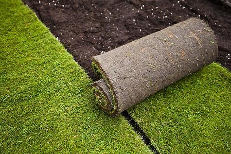 rolled grass turf in formal graden.jpg