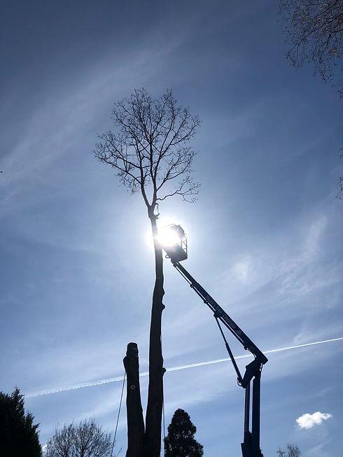 tree surgeon at work on a platform set against blue sky.jpg