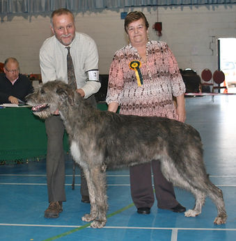 Limit Show 2015 Best In Show and Best Bitch Caredig Cariad