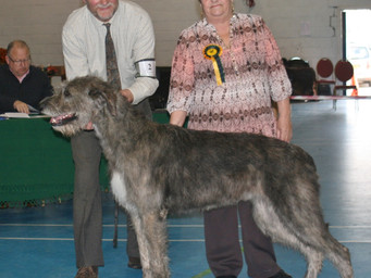 Limit Show 2015 Results