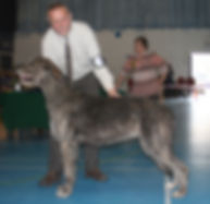 Limit Show 2015 Reserve Best In Show and Best Dog Caredig Caredog