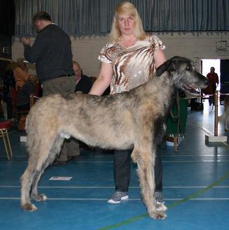 Limit Show 2015 Junior Dog 3E Stonestorm Apache Dream of Shalico