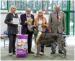 IWDotY  Champion of Year Ch Hydebeck Imperial Dream JW Pinkney.jpg