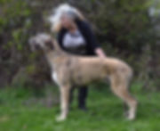 Puppy Dog Floydian Saratoga.jpg