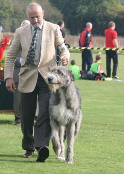 Caredig Caredog