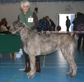 Limit Show 2015 Novice Dog 3E Anstyarna Albert Einstein