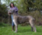 Open & Best Dog Whitglen Lrader.jpg