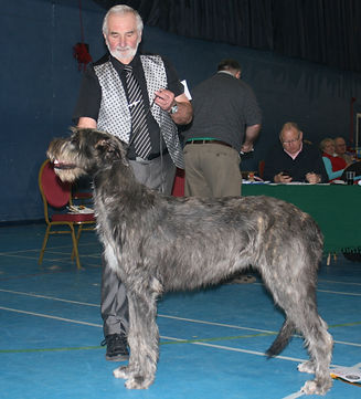 Limit Show 2015 Post Graduate Dog 6E 1abs Hydebeck Imperial Commander of Nicsar