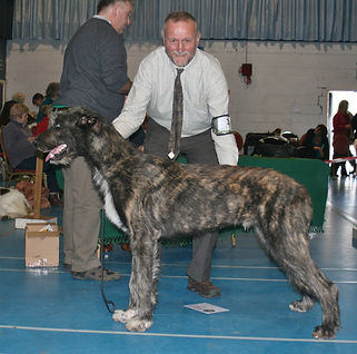 Limit Show 2015 Puppy Dog 4E 1abs Caredig Barbarian